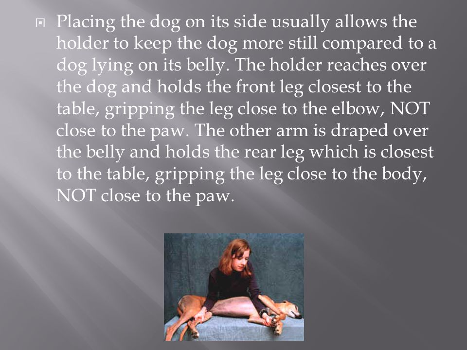 Placing the dog on its side usually allows the holder to keep the dog more still compared to a dog lying on its belly.