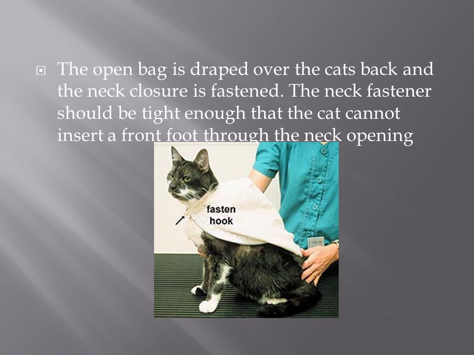 The open bag is draped over the cats back and the neck closure is fastened.