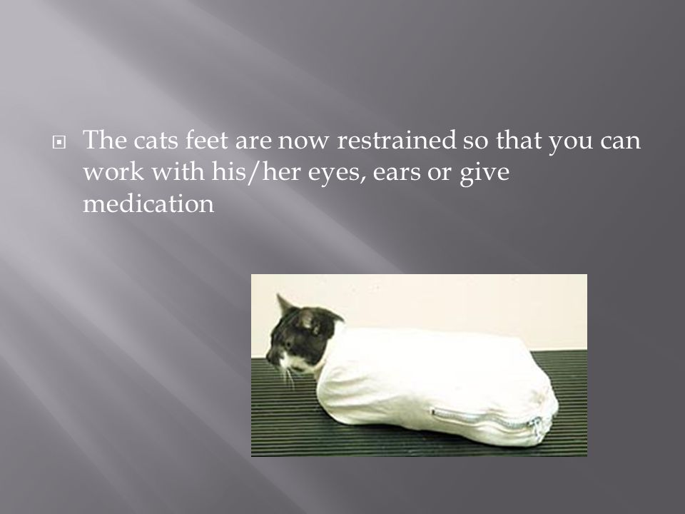The cats feet are now restrained so that you can work with his/her eyes, ears or give medication