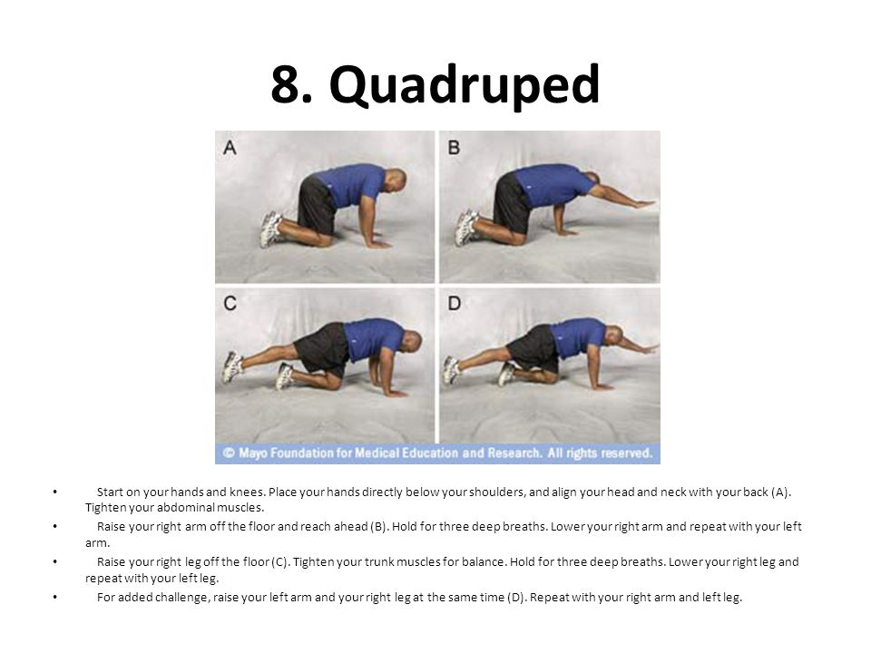 8. Quadruped