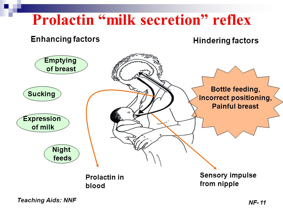 Prolactin milk secretion reflex