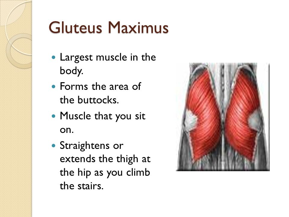 Muscular System Chapter 9 Joe Pistack Msed Ppt Download