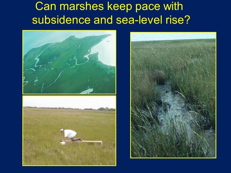 Can marshes keep pace with subsidence and sea-level rise