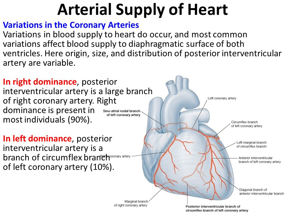 Heart Coronary Artery Anatomy Image collections - human body anatomy