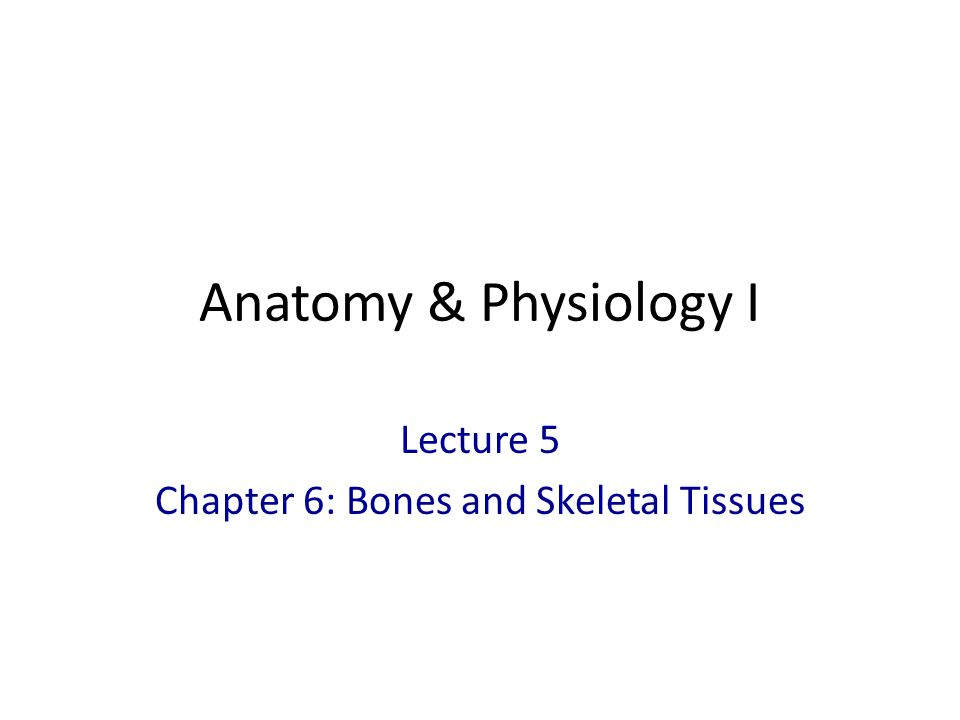 Lecture 5 Chapter 6: Bones and Skeletal Tissues - ppt video online ...