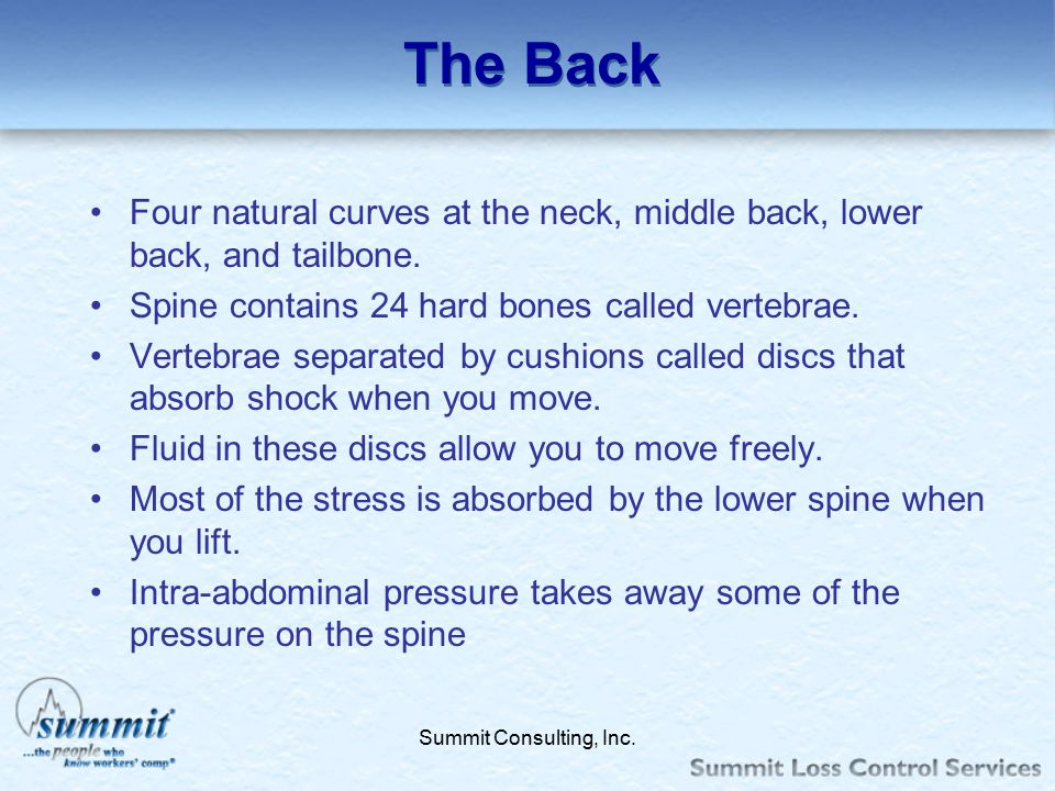 The Back Four natural curves at the neck, middle back, lower back, and tailbone. Spine contains 24 hard bones called vertebrae.