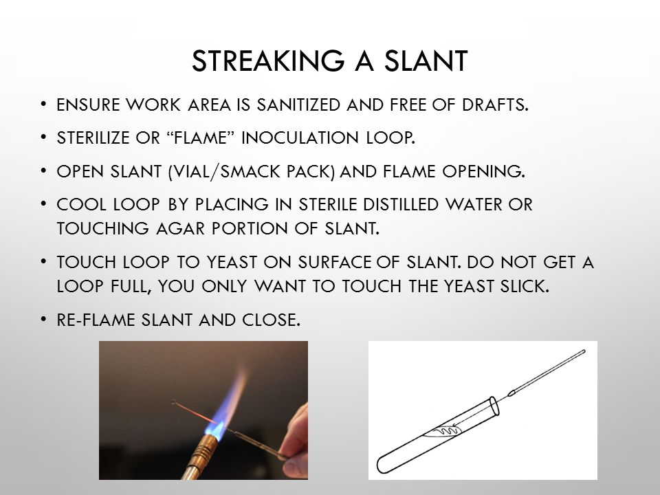 Streaking a slant Ensure work area is sanitized and free of drafts.