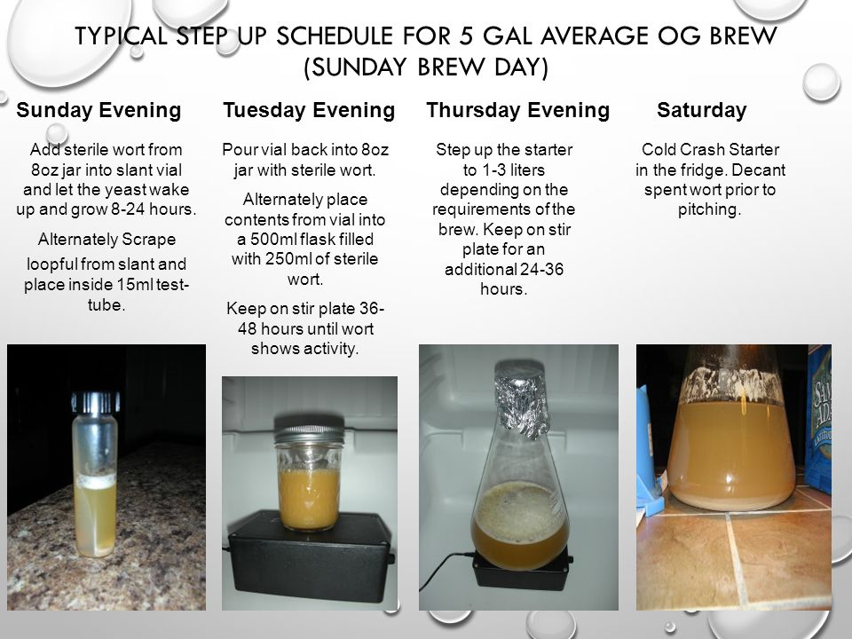 Typical step up schedule for 5 gal average OG brew (Sunday brew day)