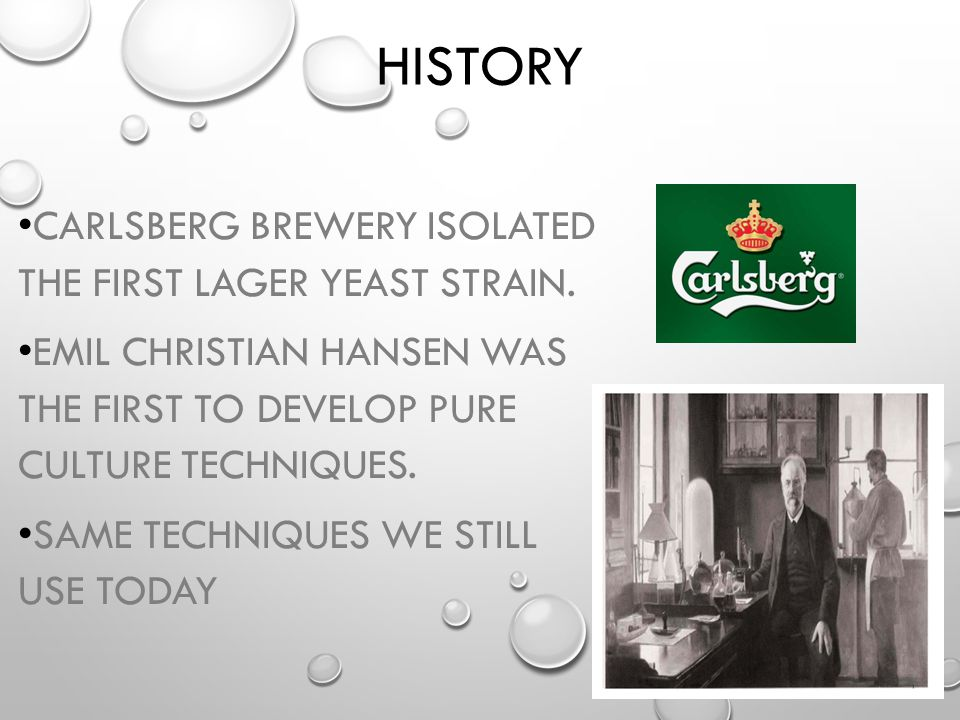 History Carlsberg Brewery isolated the first lager yeast strain.