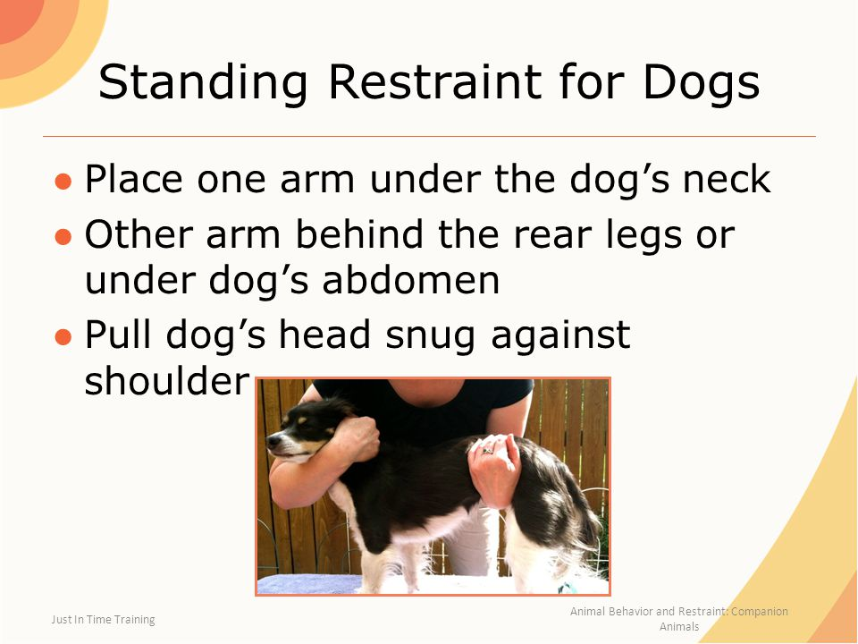 limitations on physical restraint Physical restraint or seclusion of their child, which shall require the district and school to investigate the circumstances surrounding the physical restraint or seclusion, make written findings, and, if appropriate, take correction action.