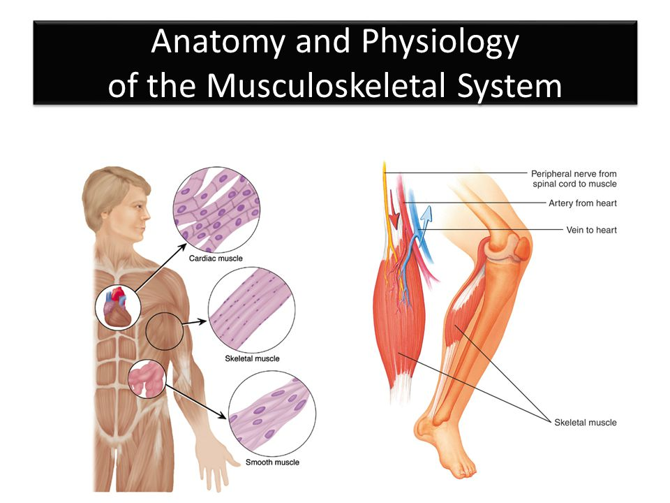 Musculoskeletal Care Chapter ppt download
