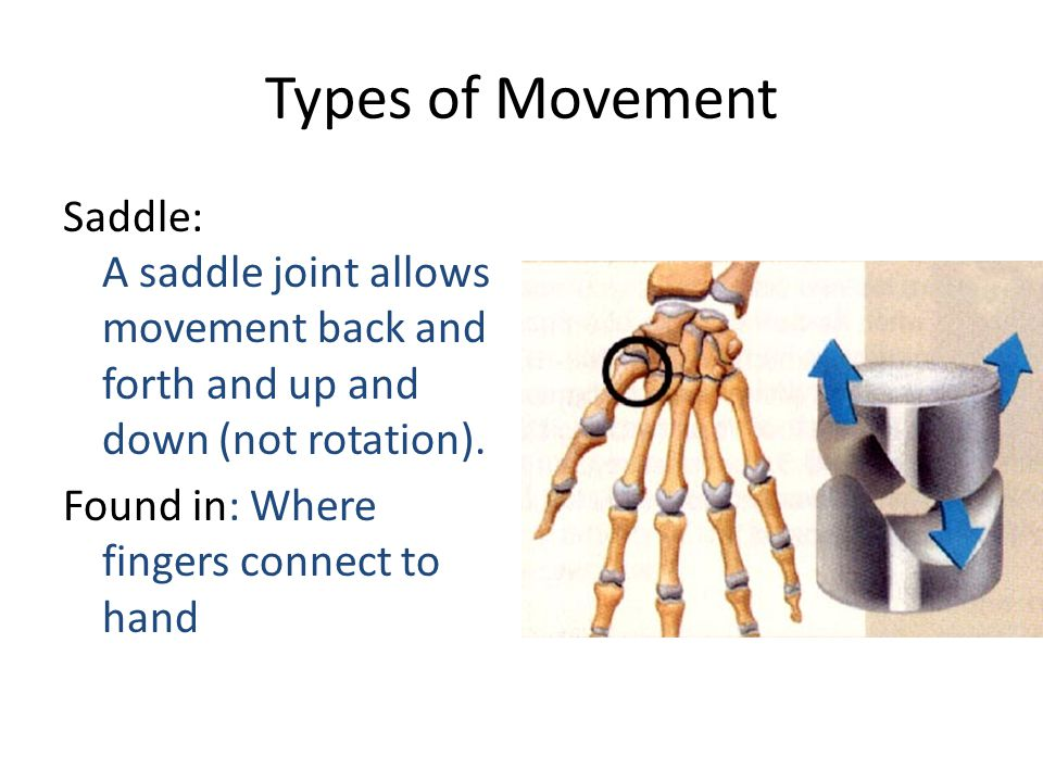 Types Of Joints Ligaments And Tendons Ppt Video Online Download