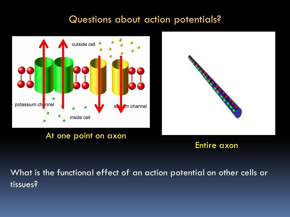 Questions about action potentials