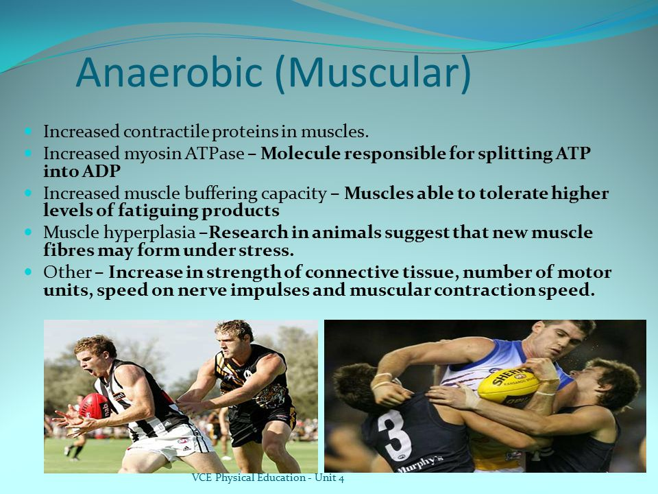 Anaerobic (Muscular) Increased contractile proteins in muscles.