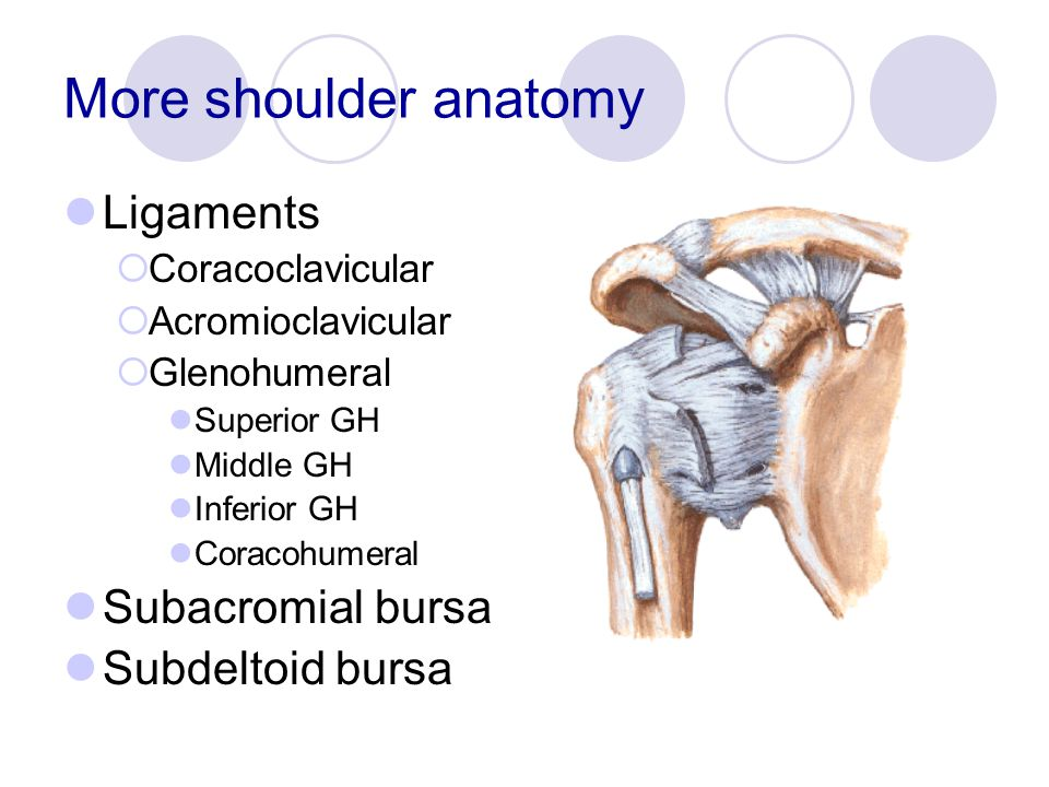 Physical Examination of the Shoulder - ppt video online download