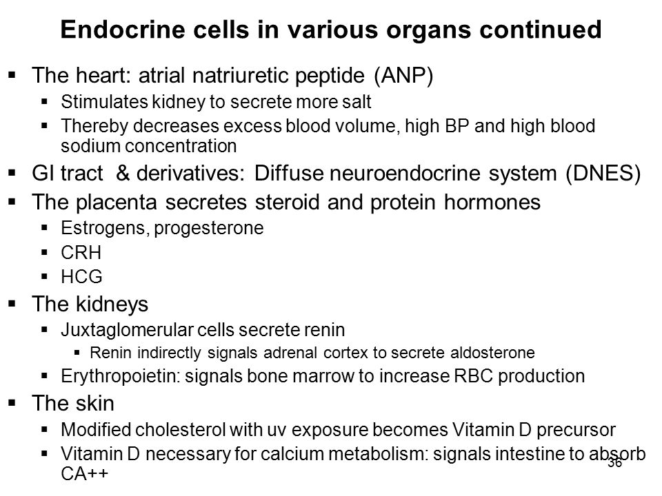 what is the neuroendocrine system