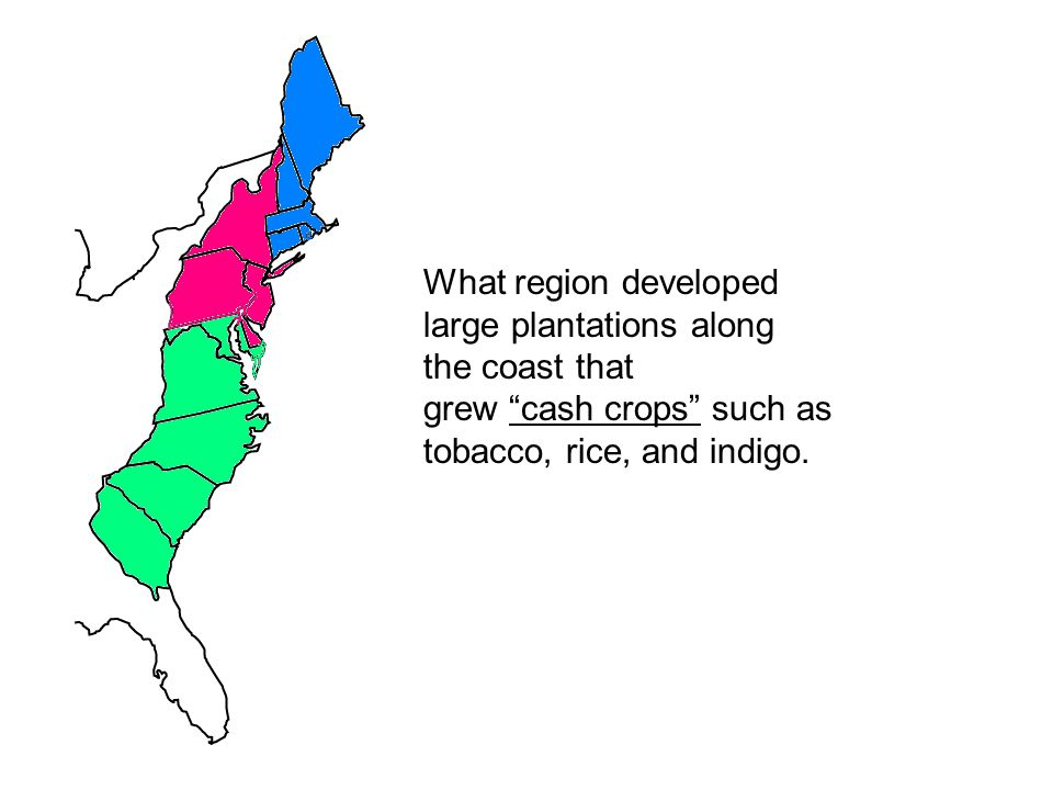 What region developed large plantations along. the coast that.