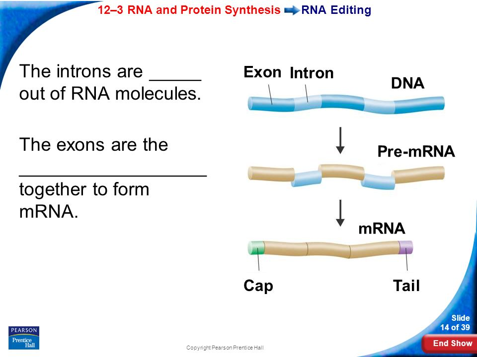 123 Rna And Protein Synthesis Ppt Video Online Download. 14 Copyright Pearson Prentice Hall. Worksheet. Section 12 3 Rna And Protein Synthesis Worksheet Answers At Mspartners.co