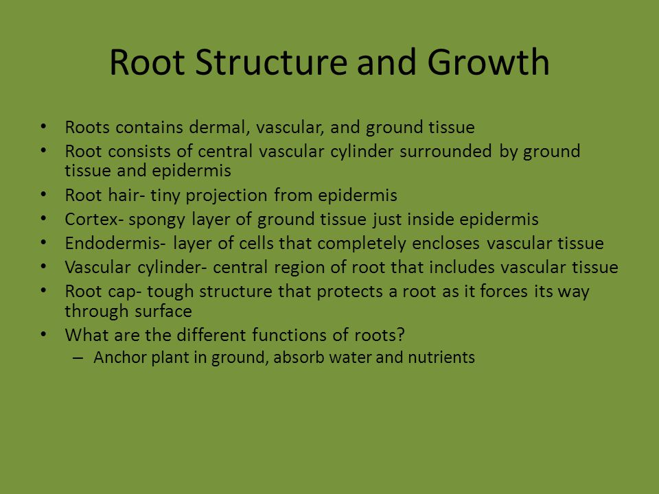 Root Structure and Growth