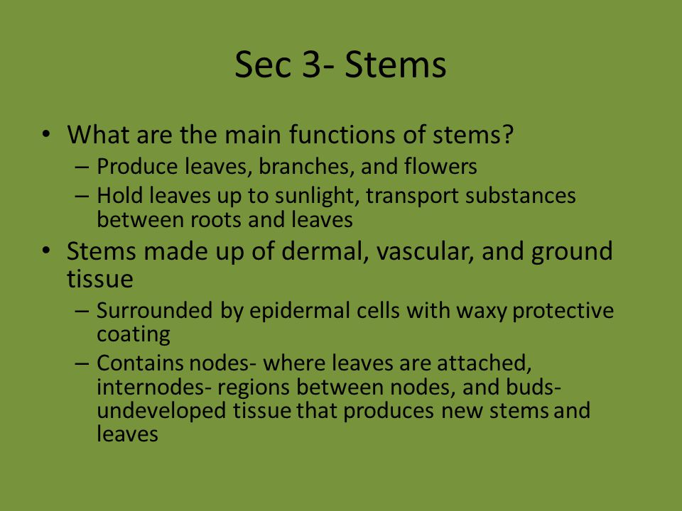 Sec 3- Stems What are the main functions of stems