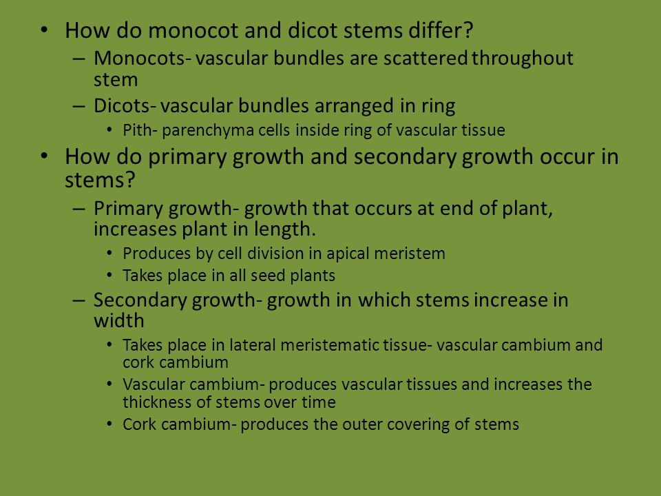 How do monocot and dicot stems differ