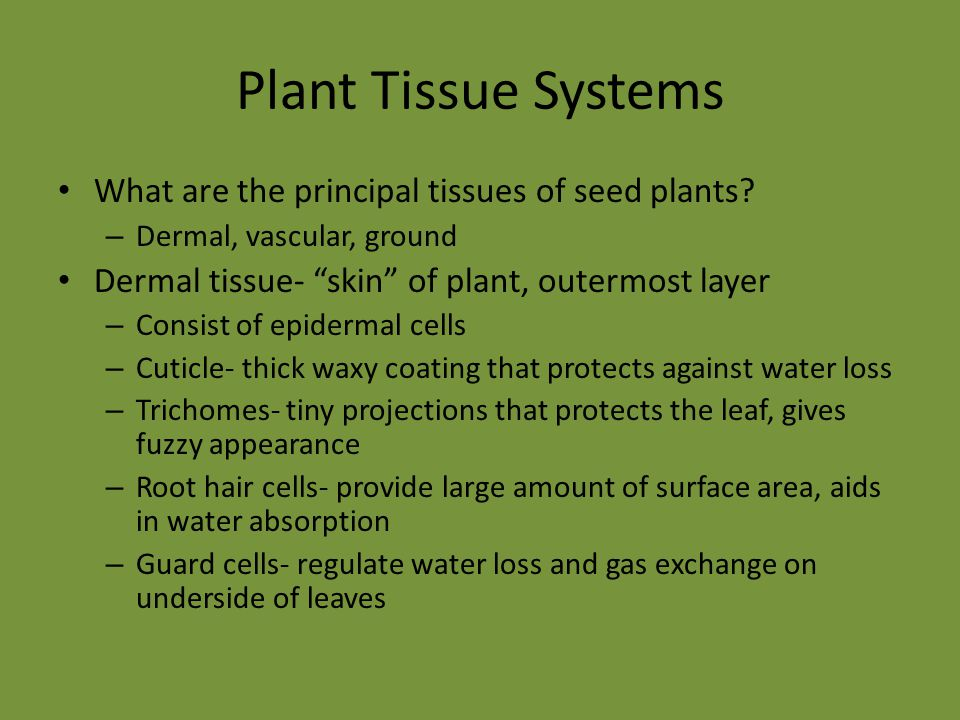 Plant Tissue Systems What are the principal tissues of seed plants