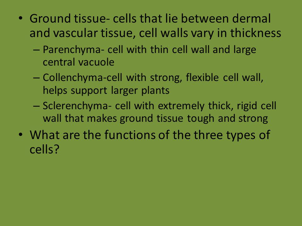 What are the functions of the three types of cells