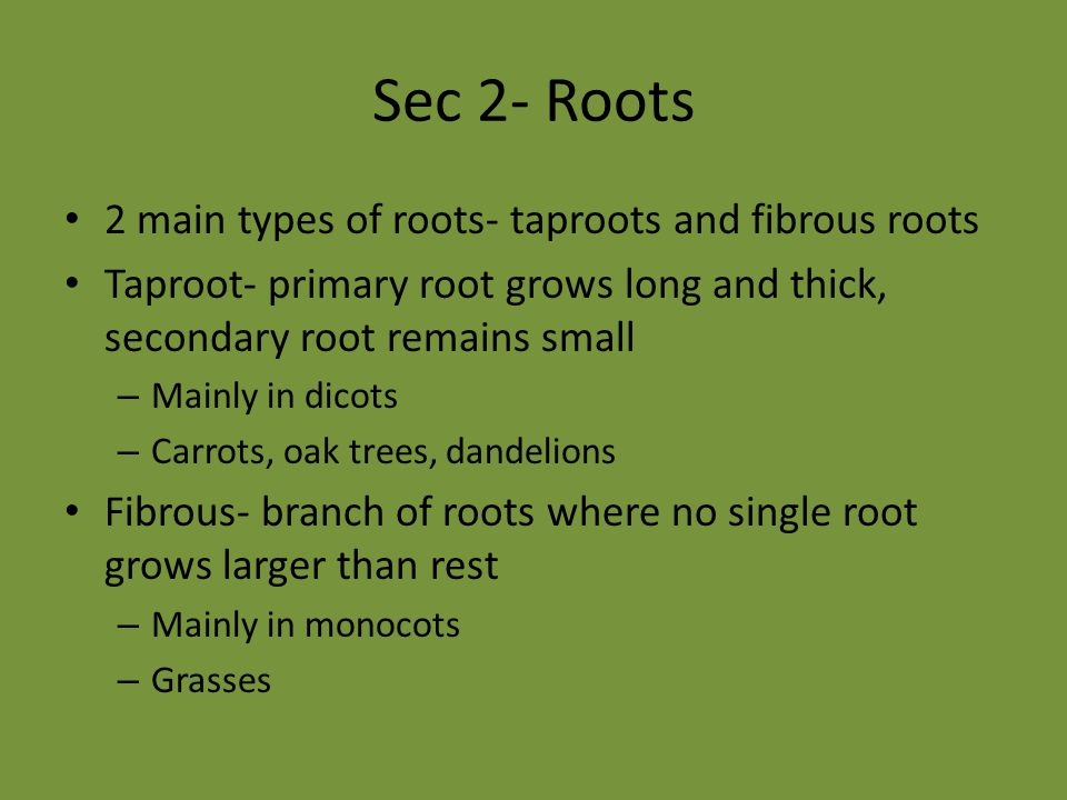 Sec 2- Roots 2 main types of roots- taproots and fibrous roots