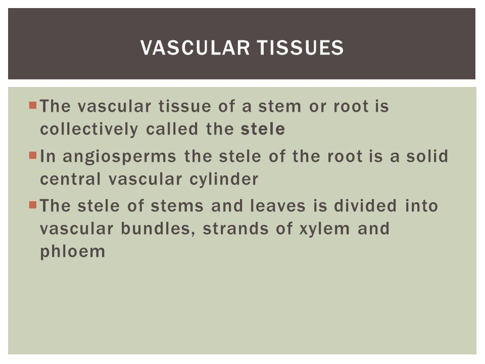 Vascular tissues The vascular tissue of a stem or root is collectively called the stele.