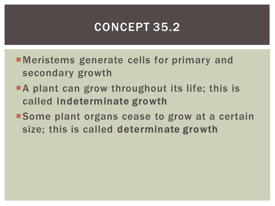 Concept 35.2 Meristems generate cells for primary and secondary growth