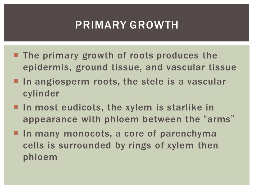 Primary Growth The primary growth of roots produces the epidermis, ground tissue, and vascular tissue.