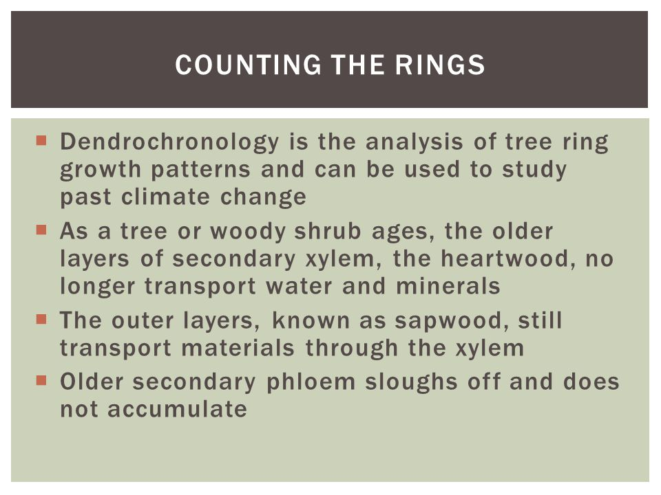 Counting the rings Dendrochronology is the analysis of tree ring growth patterns and can be used to study past climate change.