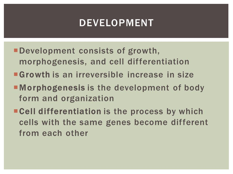 Development Development consists of growth, morphogenesis, and cell differentiation. Growth is an irreversible increase in size.