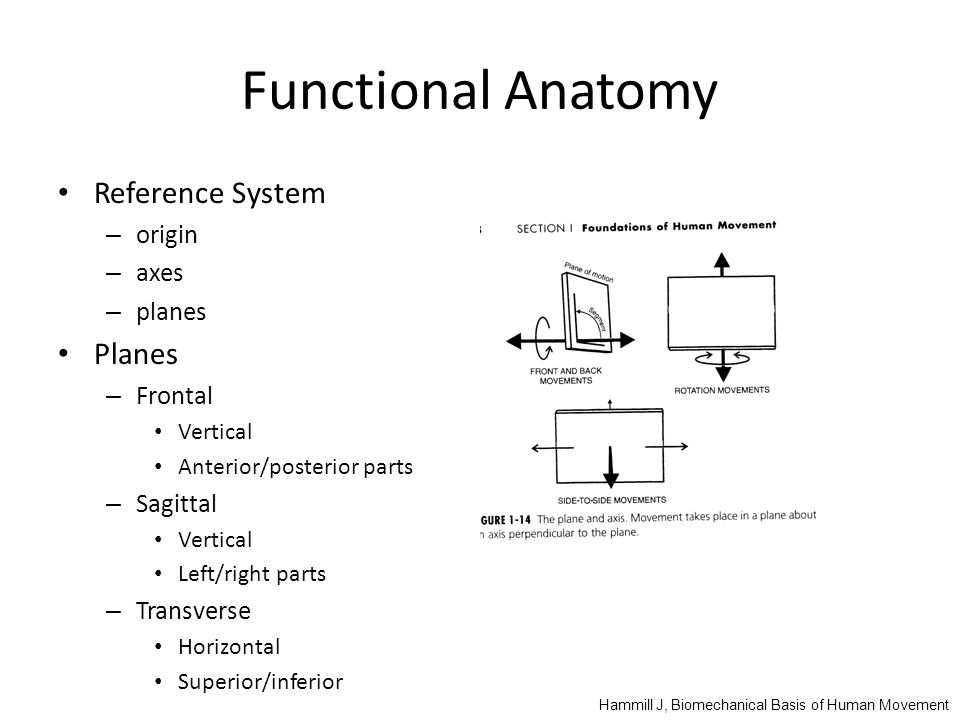 Iphy 4540 Biomechanics Objective To Learn How To Quantitatively