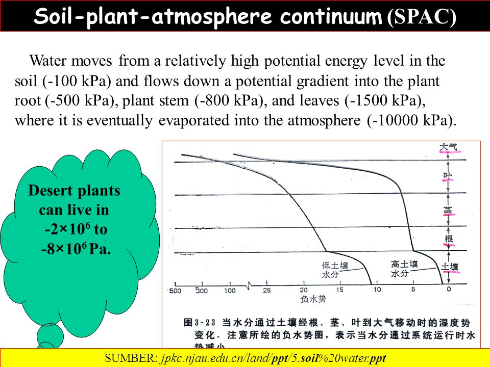 Soil-plant-atmosphere continuum (SPAC) Desert plants can live in