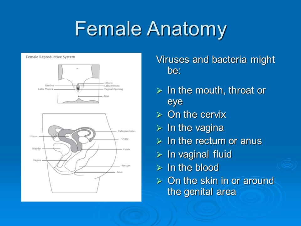 Female Anatomy Viruses and bacteria might be: