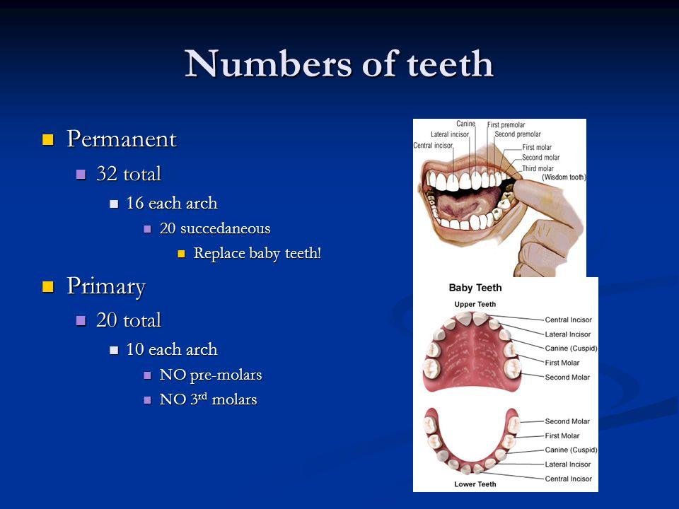 Tooth Morphology Ppt Video Online Download