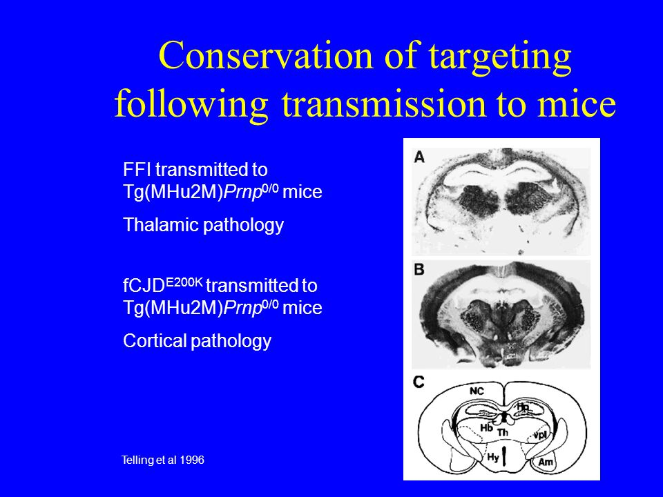 Conservation of targeting following transmission to mice