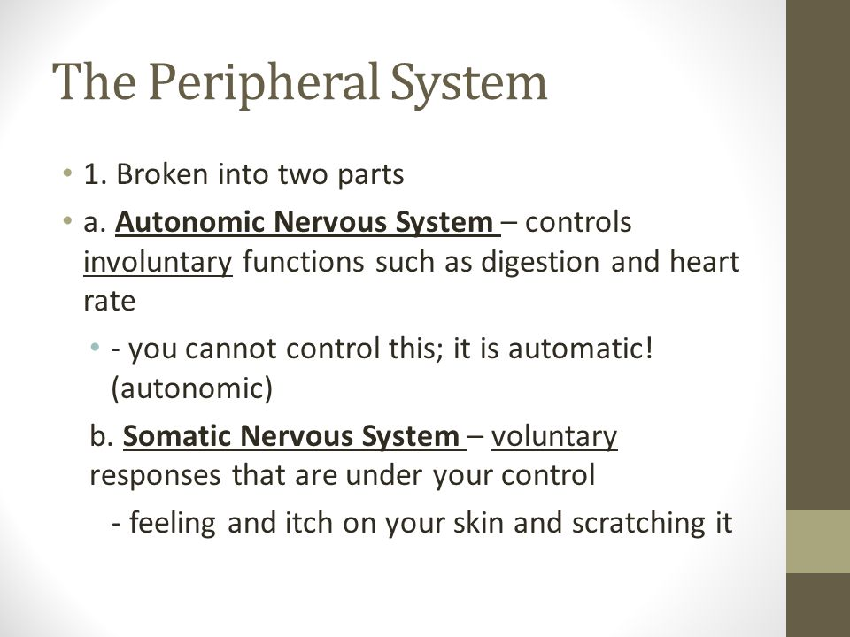 The Peripheral System 1. Broken into two parts