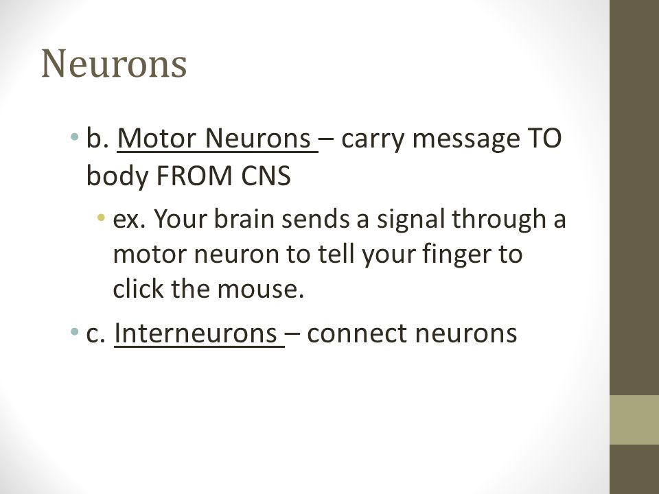 Neurons b. Motor Neurons – carry message TO body FROM CNS
