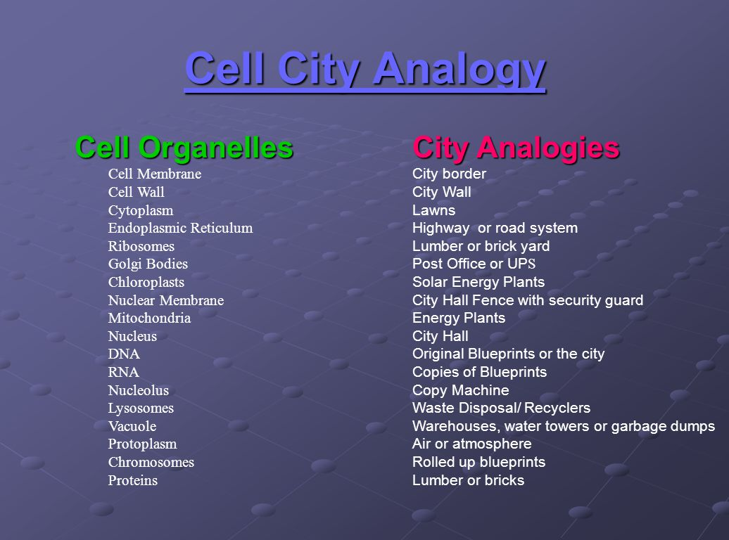 cell analogy 1 Task 1: create analogies between a plant cell's parts and a city's (or any analogy's) parts by completing the cell analogy worksheet a must: when making the analogies between your cell and your city (or other analogy), the functions of.