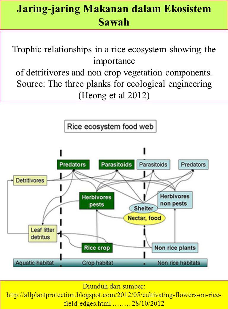 Kajian lingkungan dan pembangunan ppt download jaring jaring makanan dalam ekosistem sawah ccuart Image collections
