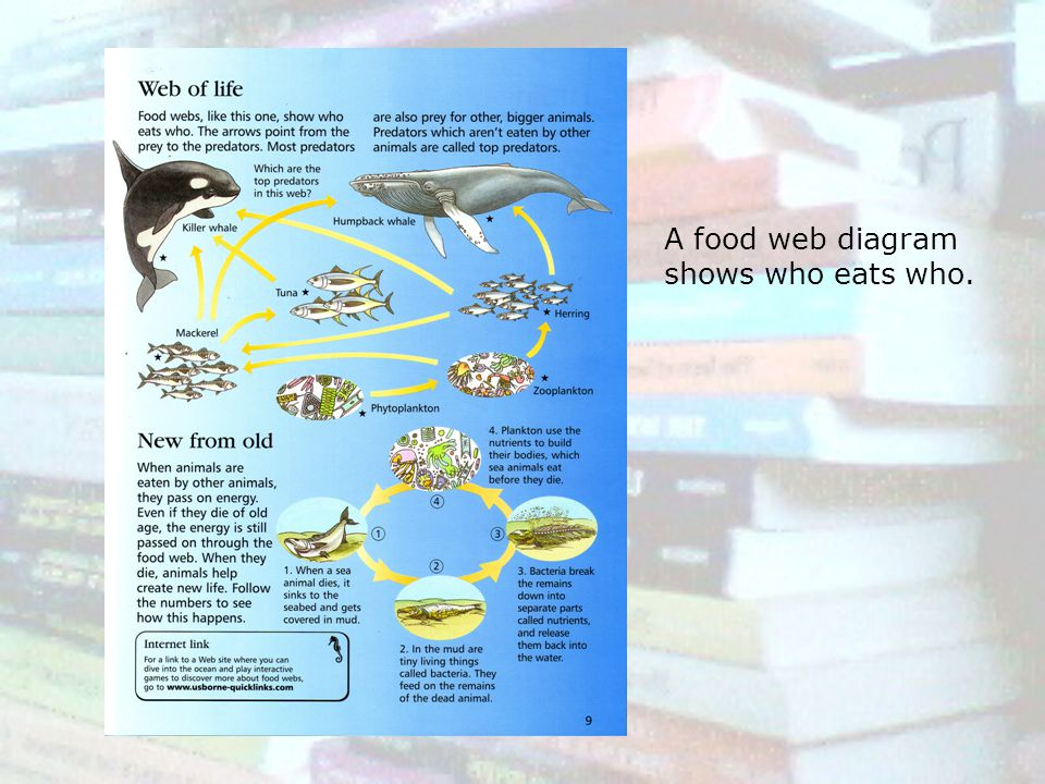 A food web diagram shows who eats who.