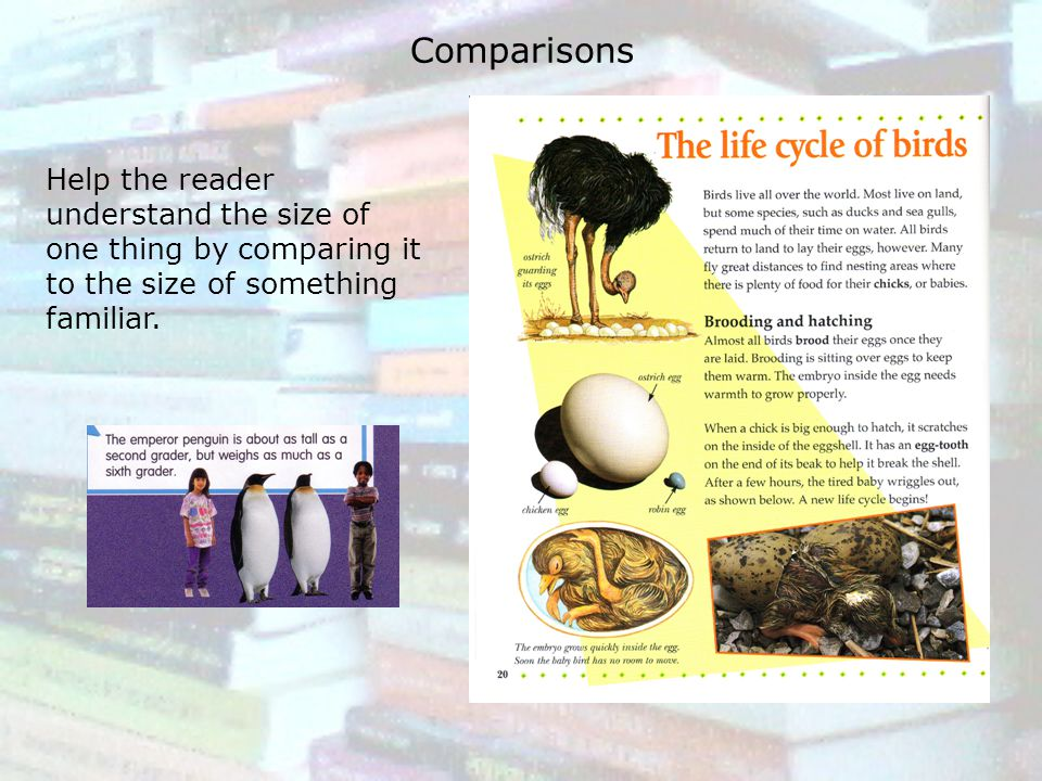 Comparisons Help the reader understand the size of one thing by comparing it to the size of something familiar.