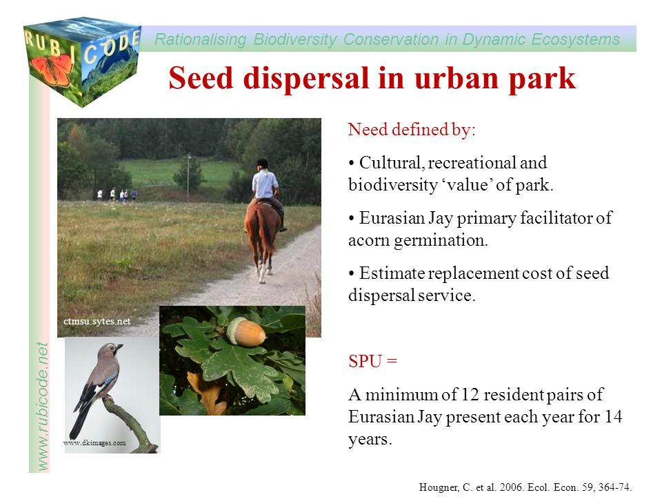 Seed dispersal in urban park