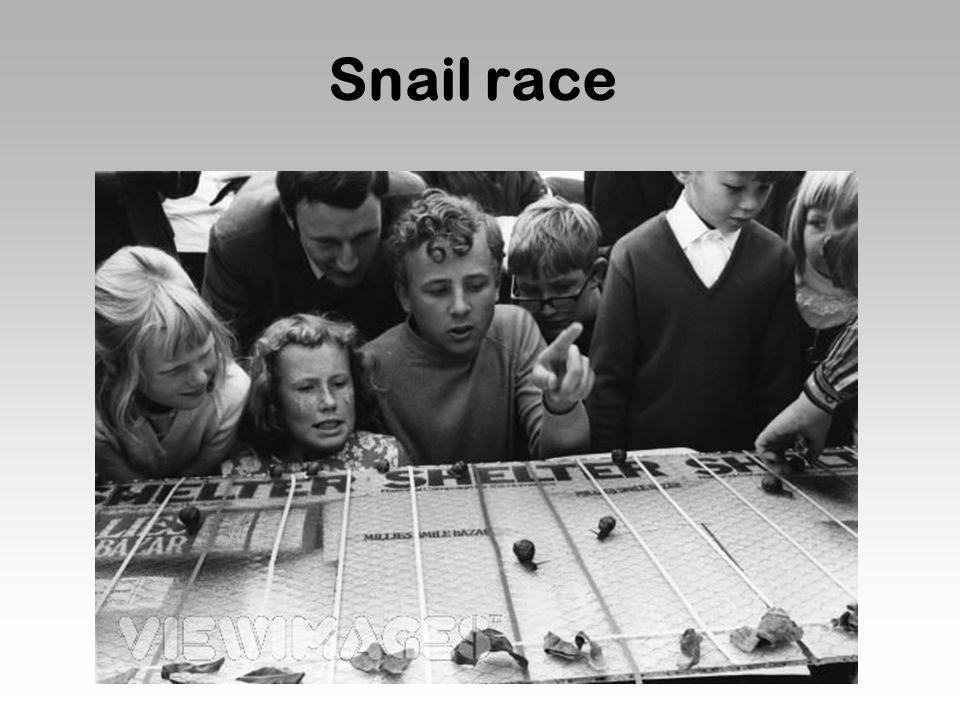 Snail race  - ppt download