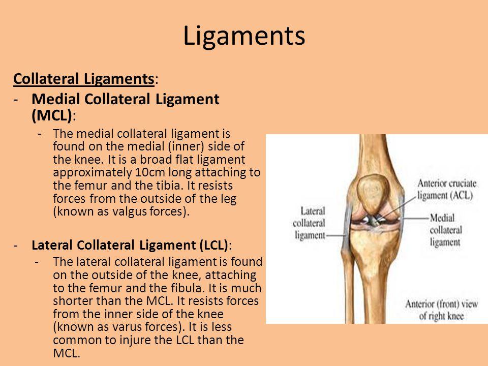 Medial Knee Anatomy Golfclub
