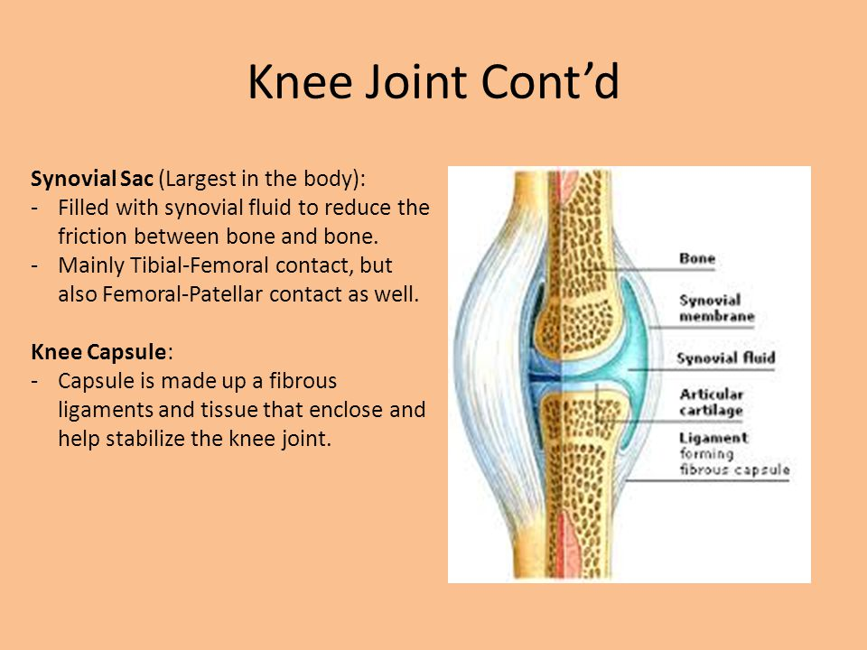 Knee Anatomy Bones Ligaments And Cartilage Ppt Video Online Download