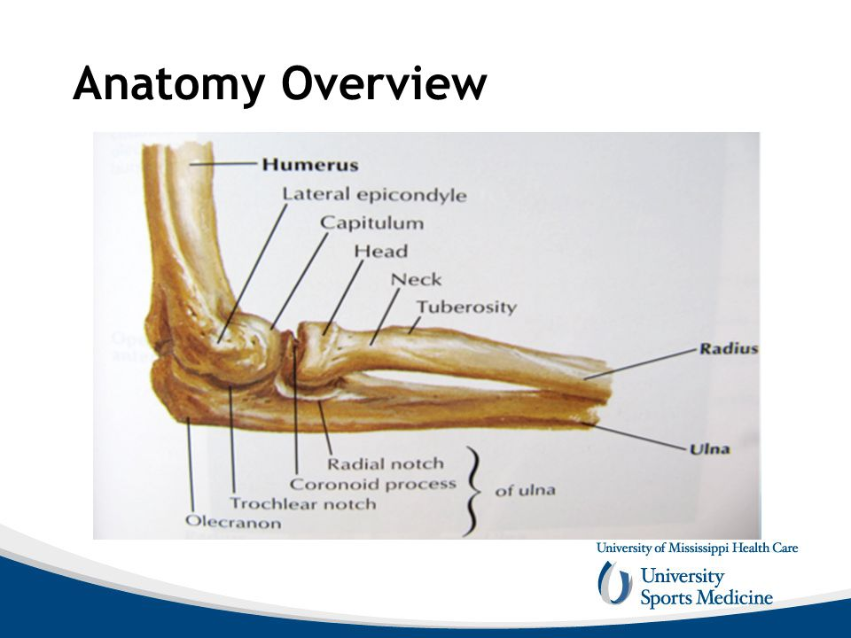 Elbow Anatomy and Biomechanics - ppt video online download