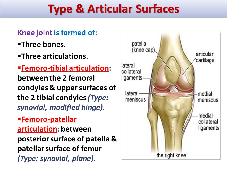 Knee Joint Ppt Video Online Download